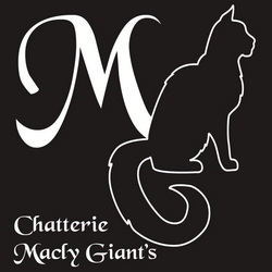 BE_MAINE-COON_macLyGiants_LOGO